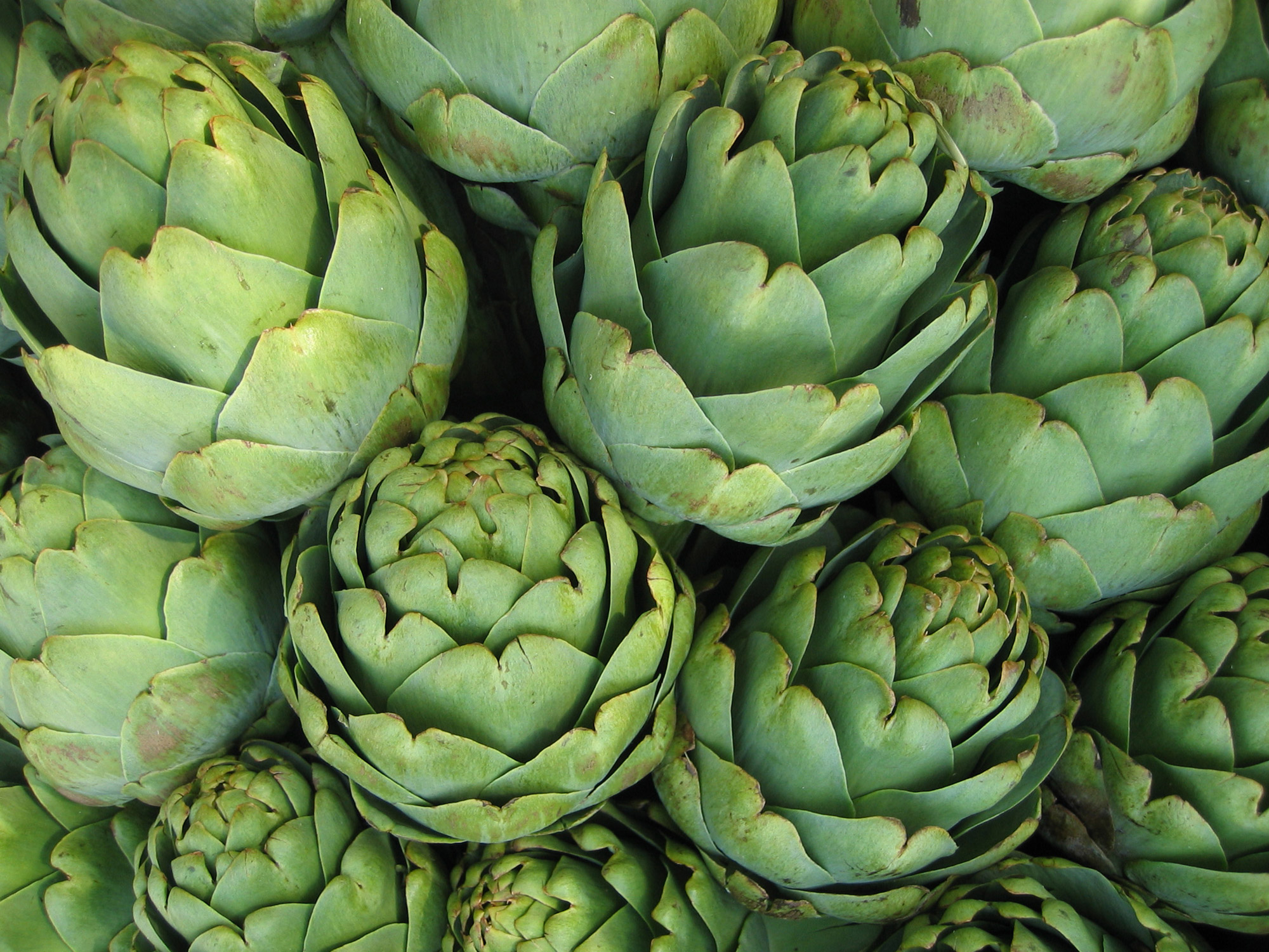 California Artichoke Advisory Board » How To Eat An Artichoke