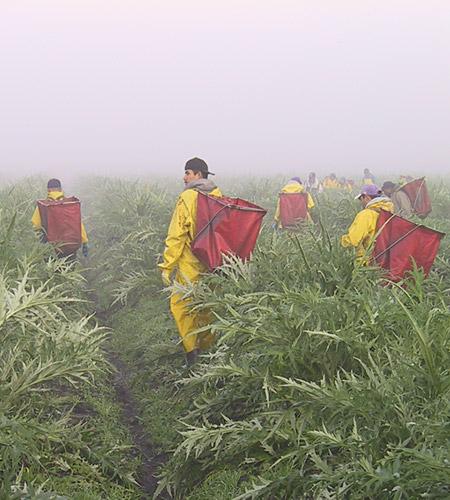 Harvesting workers