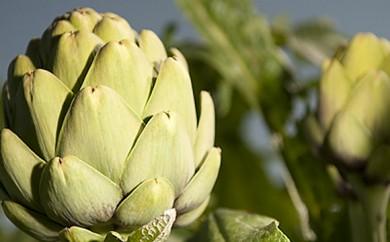 Basic artichoke